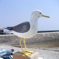 Common Seagull Wooden Bird | Hand Carved Birds